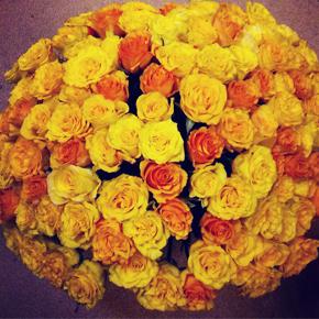 Букет желтых роз Эквадор 101 штука 40 см