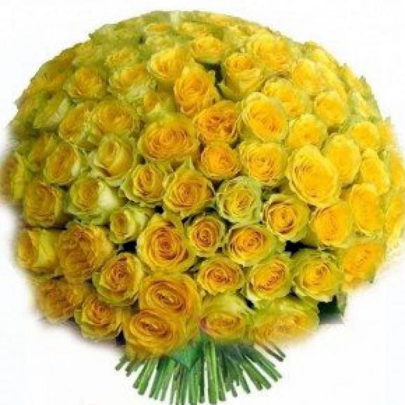 Букет желтых роз Эквадор 101 штука 50 см