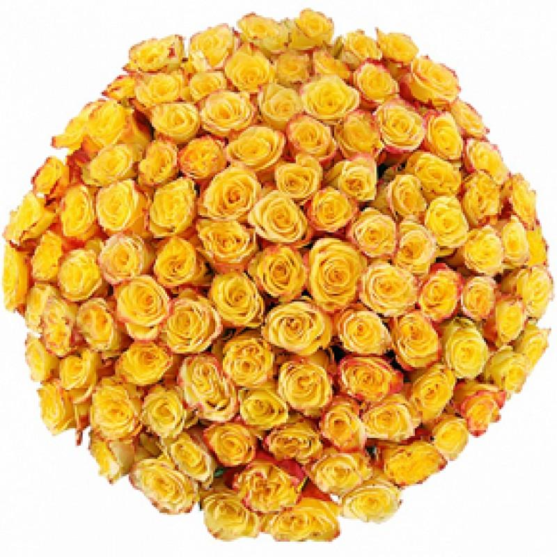 Букет желтых роз Эквадор 101 штука 80 см