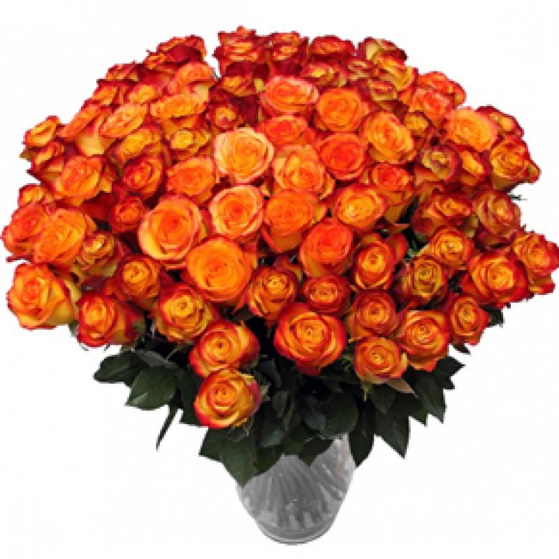 Букет желтых роз Эквадор 151 штука 70 см