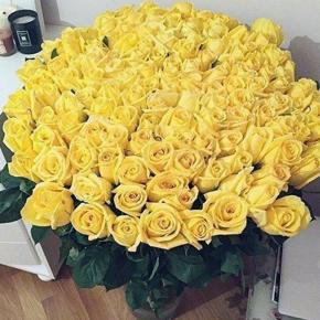 Букет желтых роз Эквадор 201 штука 70 см