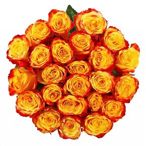 Букет желтых роз Эквадор 25 штук 50 см