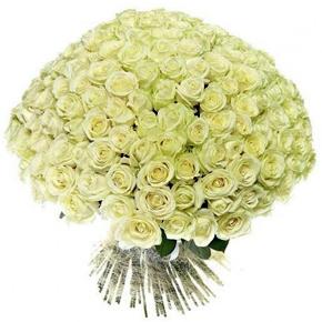 Букет белых роз Эквадор 151 штука 50 см
