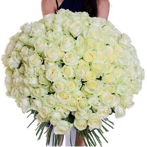 Букет белых роз Эквадор 201 штука 70 см