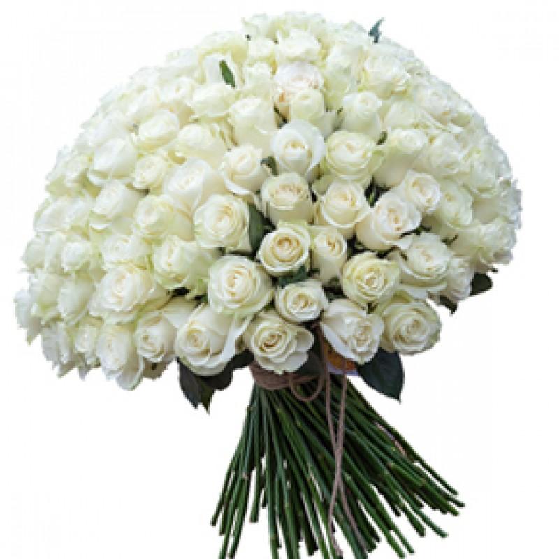 Букет белых роз Эквадор 101 штука 70 см