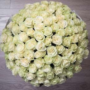 Букет белых роз Эквадор 301 штука 60 см