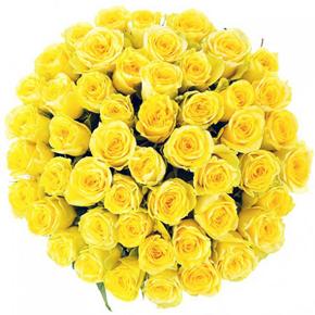 Букет желтых роз Эквадор 51 штука 60 см