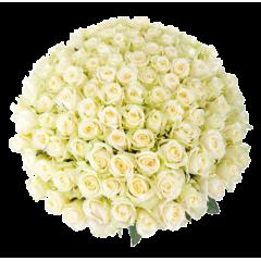 Букет белых роз Эквадор 151 штука 60 см
