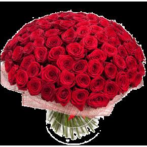Букет красных роз Эквадор 151 штука 50 см