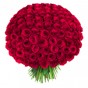 Букет красных роз Эквадор 151 штука 60 см