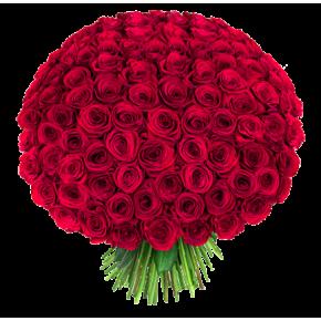 Букет красных роз Эквадор 301 штука 60 см