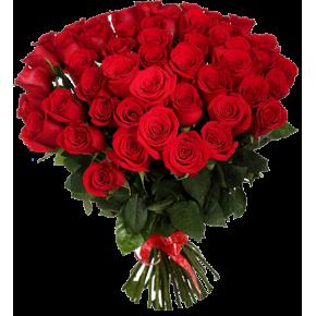 Букет красных роз Эквадор 51 штука 50 см
