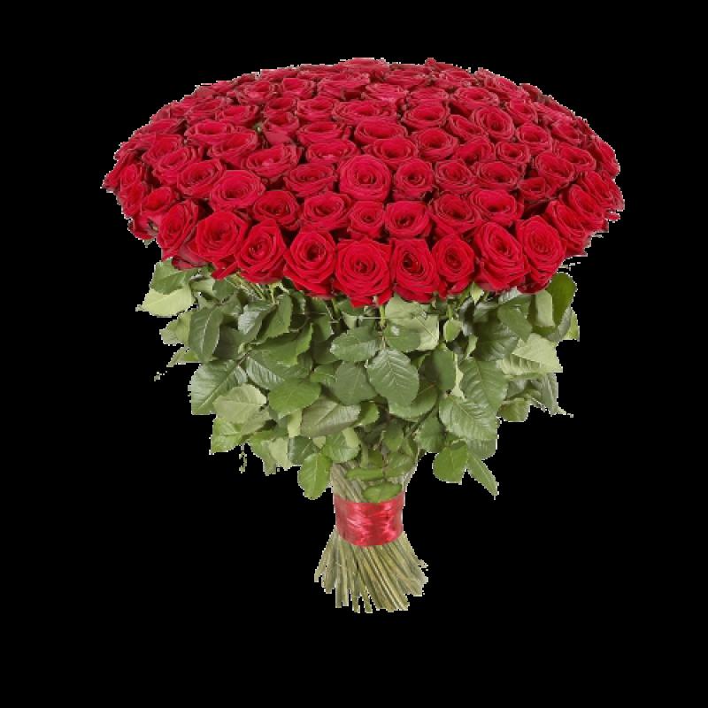 Букет красных роз Эквадор 51 штука 70 см