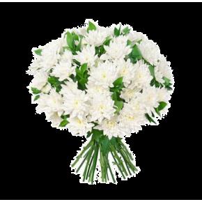 Хризантемы белые 25 штук