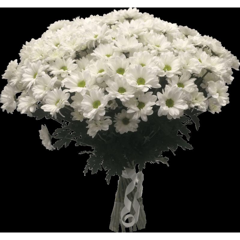 Хризантемы белые 75 штук