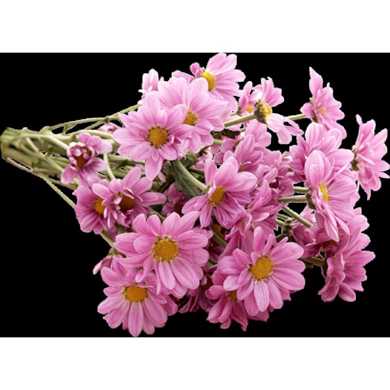 Хризантемы розовые 5 штук