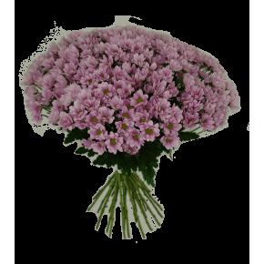 Хризантемы розовые 75 штук