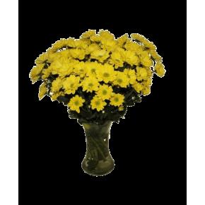 Хризантемы желтые 25 штук