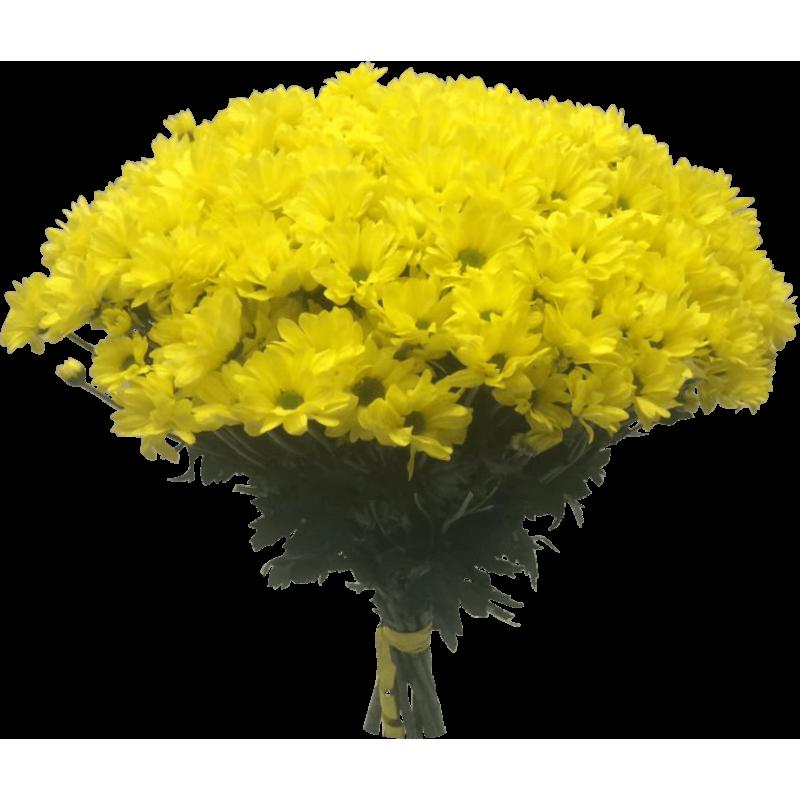 Хризантемы желтые 51 штука