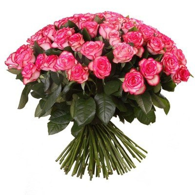 Букет розовых роз Эквадор 25 штук 40 см