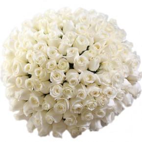 Букет белых роз Эквадор 101 штука 50 см