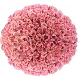 Букет розовых роз Эквадор 151 штука 60 см