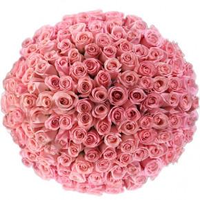 Букет розовых роз Эквадор 151 штука 50 см