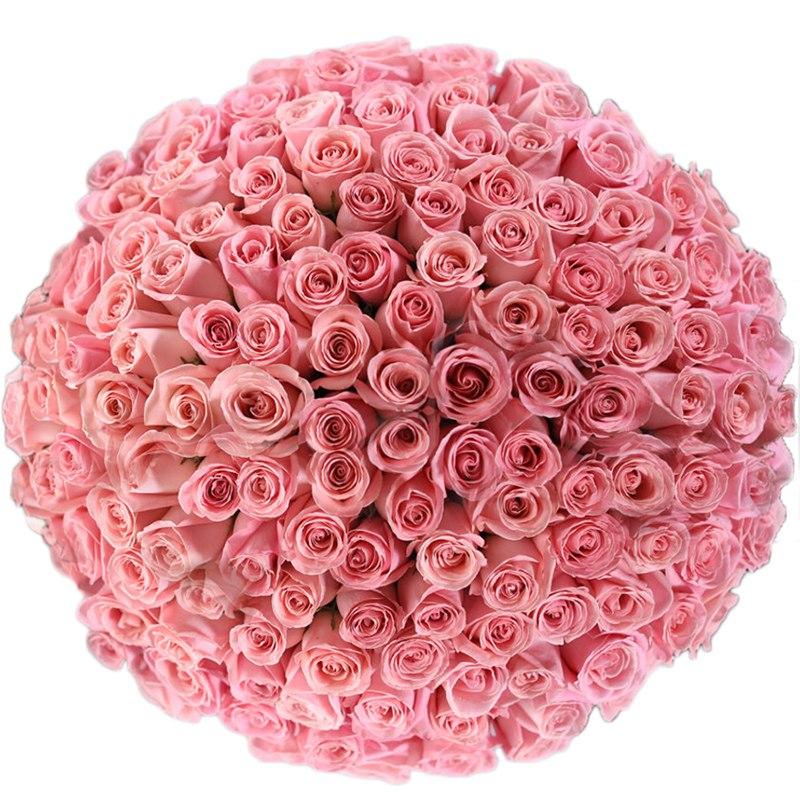 Букет розовых роз Эквадор 151 штука 70 см